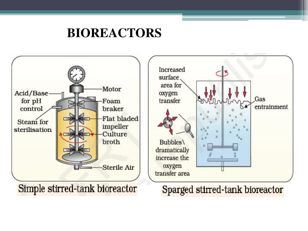 what are the applications of biotechnology